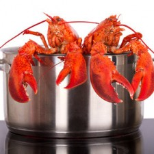 lobster-in-pot